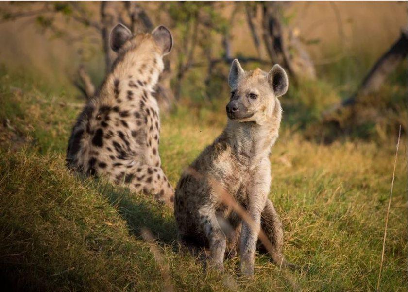 À la découverte d'une belle destination safari : le Botswana